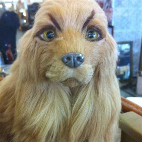 Hilarious Dogs With Stupid & Ridiculous Fake Eyebrows