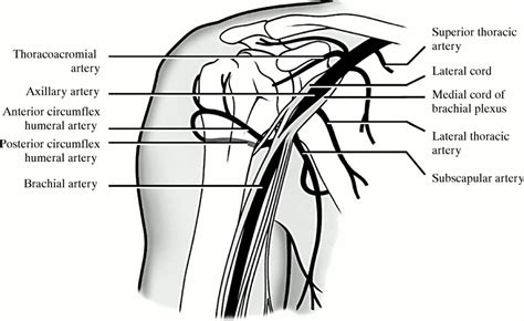 Focal lingual dystonia, urinary incontinence, and sensory