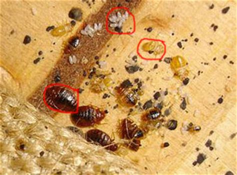 Signs of an Infestation :: Health Topics :: Contra Costa